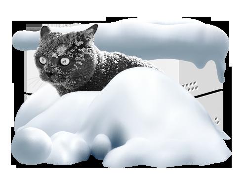 World Snow Day!